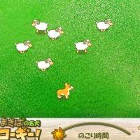 Pies i owce